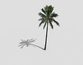 3D asset low poly palm tree