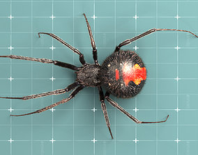 animated Black widow spider 3d model