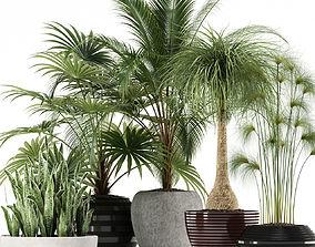 3D model Plants collection 103
