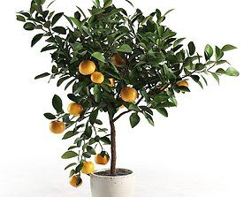 3D Citrus Tree in Pot 2