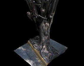 Big Tree scanned 3D
