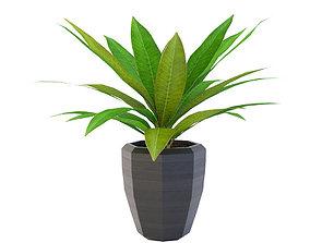 Artificial Plant 3D