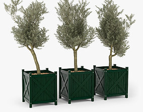 Olive tree green boxes 3D
