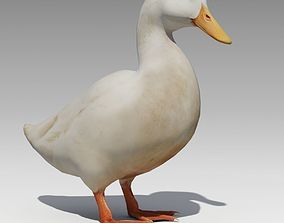 Duck Animated 3D asset