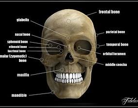 3D Human skull std mat