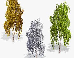 3D Birch Tree 02