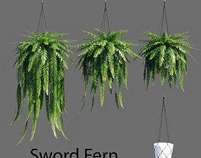 Sword Fern 3D model