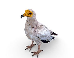 Egyptian vulture Neophron percnopterus 3D asset