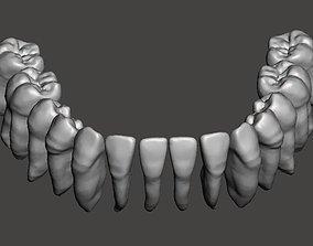 Mandibular real human teeth full arch 3D printable model