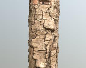 Thin pear tree trunk 3D asset