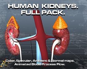 3D model Human Kidneys Full Pack