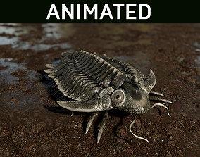 3D asset Trilobite 01 - Metopolichas