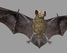 Bat animation 3D asset