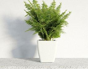 3D plant 47 am141