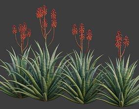 XfrogPlants Aloe Blue Elf - Aloe Monrovia 3D animated