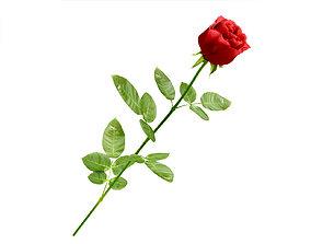 3D Rose Red