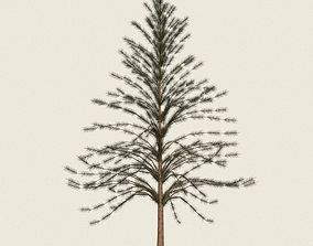 Game Ready Conifer Tree 07 3D asset