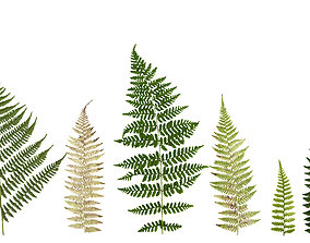 Lady Fern Frond Texture Pack - 22 Textures 3D model
