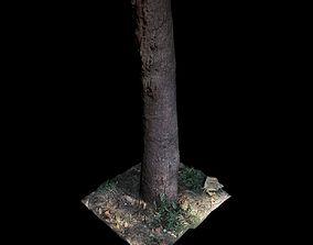 garden Big Tree 3D model