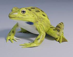 Indian Bullfrog - Animated 3D asset