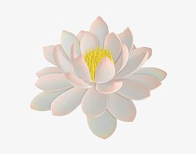 White water lily flower 3D