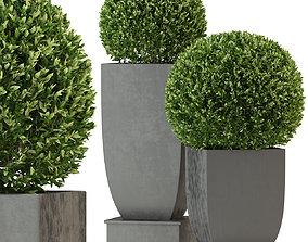 3D model Plants collection 328