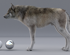 rigged realtime WOLF 3d model RIGGED FUR