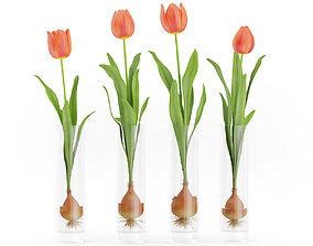 Four Tulips in Glasses 3D