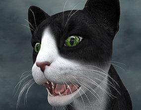 3D model UVWC-017 Cat Textures Only