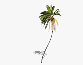3D model Coconut Palm Tree 10708