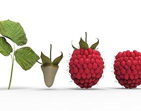raspberry 3D model summer