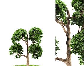 3D model tree 119-4
