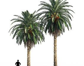 3D Date palm 2