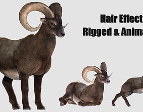 rigged goat ram sheep 3D model animated