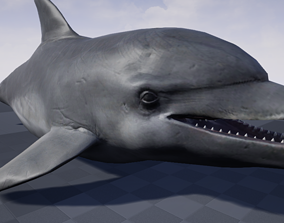 Dolphin Model rigged