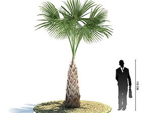3D Green Palm Tree sandy