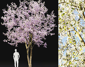 Cherry-tree Flowering 02 3D