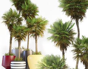 3D model Palm trees 01