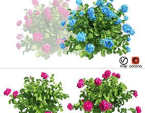 Plants Hydrangea set 03 3D hydrangeaflower