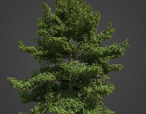 2021 PBR Little Leaf Linden Collection - Tilia Cordata 3D