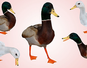3D asset Duck lowpoly