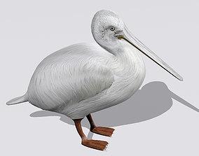 Pelican 3D model bird