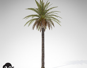 3D tropical XfrogPlants Canary Date Palm