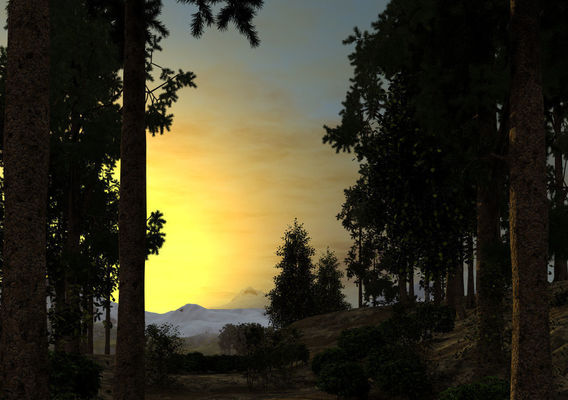 Sunset in a pine forest
