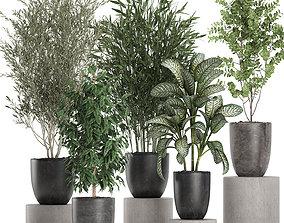 Decorative plants in a black flowerpots 648 3D model