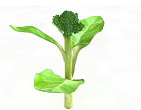 3D asset Broccoli Rabe
