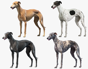 Greyhound Collection 3D model