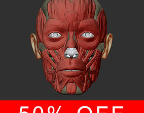 3D model Head anatomy muscles