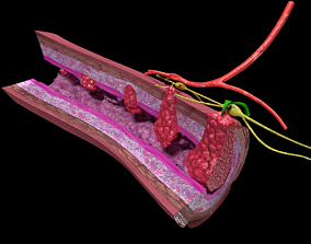 3D model Colon cancer staging detail labelled