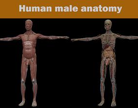 3D model male Human MALE anatomy